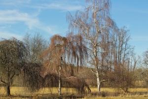 tre nyanser av träd